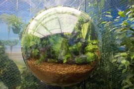 Жизнь в полусферах в Зеленой Галерее в Гринвиче!
